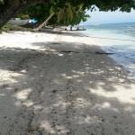 Looc Beach Front